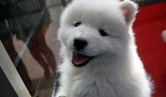 FILE: Puppy source: Pixabay