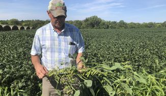 """Farmer Randy Miller is shown with his soybeans, Thursday, Aug. 22, 2019, at his farm in Lacona, Iowa.  Miller, who also farms corn, is among farmers unhappy with President Donald Trump over  waivers granted to oil refineries that have sharply reduced demand for corn-based ethanol. Miller called it """"our own country stabbing us in the back."""" (AP Photo/Julie Pace)"""
