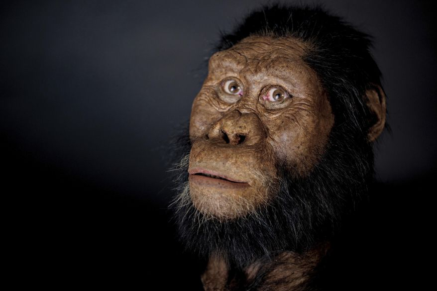 """This undated photo provided by the Cleveland Museum of Natural History in August 2019 shows a facial reconstruction model by John Gurche made from a fossilized cranium of Australopithecus anamensis. The species is considered to be an ancestor of A. afarensis, represented by """"Lucy"""" found in 1974. From 3.8 million years ago, the ancestral species is the oldest known member of Australopithecus, the grouping of creatures that preceded our own branch of the family tree, called Homo. (Matt Crow/Cleveland Museum of Natural History via AP)"""