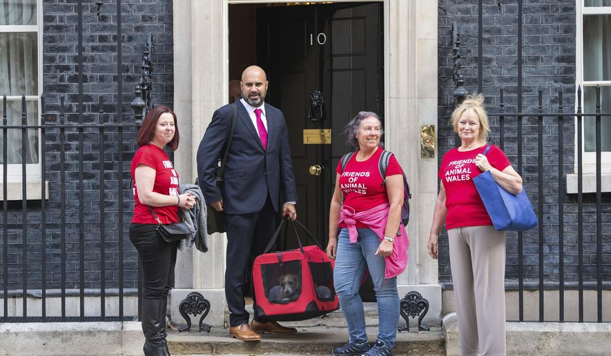 Eileen Jones, right, who runs Friends of Animals Wales and colleagues deliver a 15-week-old Jack Russell-cross puppy adopted by Britain's Prime Minister Boris Johnson and his partner Carrie Symonds arrives in Downing Street, London, Monday, Sept. 2, 2019. (Dominic Lipinski/PA via AP)