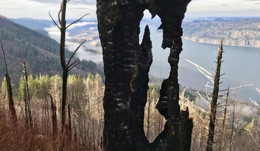 This Dec. 13, 2018 photo shows a view at the Angel's Rest Trail in the Columbia River Gorge that was closed due to the Eagle Creek fire that burned through the forest near Portland, Ore. Stan Hinatsu with the U.S. Forest Service tells The Oregonian that the 13-mile (21-kilometer) trail could open as early as fall 2019 or as late as next summer, depending on weather and assessments from forest officials. (Jamie Hale/The Oregonian via AP)
