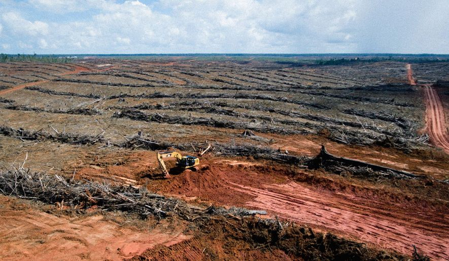 Aerial photo showed heavy equiptment working at palm oil plantation owned by PT Papua Alam Lestari.