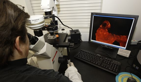 A research specialist views nerve cells derived from human embryonic stem cells under a microscope at the University of Michigan Center for Human Embryonic Stem Cell Research Laboratory in Ann Arbor, Mich., Wednesday, Oct. 22, 2008.  (AP Photo/Paul Sancya)