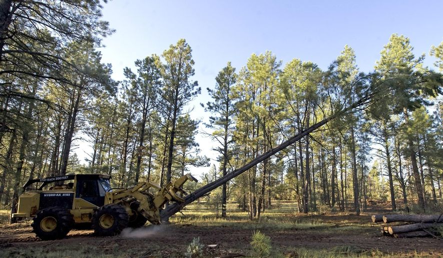 In this Aug. 25, 2009, file photo, logging equipment cuts down a tree near Reserve, N.M.  (AP Photo/Chris Carlson, File) **FILE**