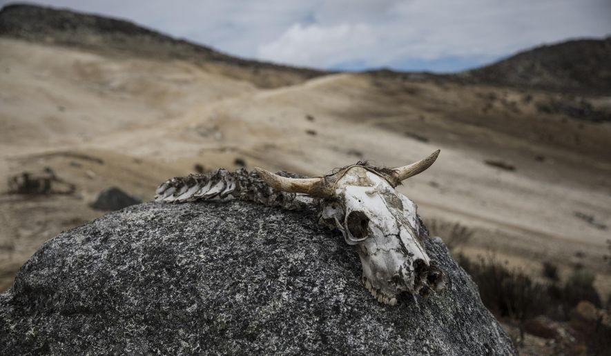 In this Feb. 19, 2019 photo, the bones of an animal lie on a rock during a scientific mission to study how temperatures and plant life are changing in the Andean ecosystem known as the paramos _ a mist-covered mountain grassland that lies between the top of the treeline and the bottom of the Humboldt glacier, in Merida, Venezuela. A team of scientists in Venezuela is trying to weather the political and economic crisis engulfing their country to record what happens as Venezuela's last glacier vanishes. (AP Photo/Rodrigo Abd)