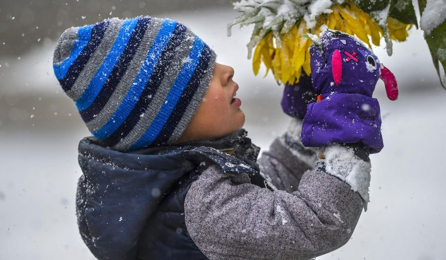 Connor Cruz, age 5, inspects snow laden sunflowers during a snow storm, Saturday, Sept. 28, 2019, in Great Falls, Mont. Strong winds and heavy snow caused power outages and temporary road closures in northwestern Montana as a wintry storm threatened to drop several feet of snow in some areas of the northern Rocky Mountains. (Rion Sanders/The Great Falls Tribune via AP)
