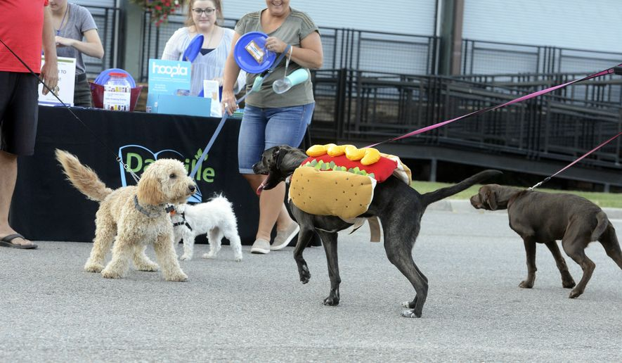 In this file photo, dogs of various sizes accompanied their owners to the Barktober festival in downtown Danville, Va., on Thursday, Oct. 3, 2019. A new study from Sweden suggests dog ownership may help improve life expectancy for survivors of heart attacks, perhaps because it serves as a means for physical exercise. (Caleb Ayers/Danville Register & Bee via AP) **FILE**