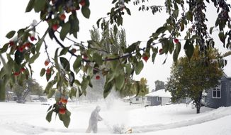 Crab apples still cling to the green leafed branches while Thomas Kok uses a snow blower to clear his driveway and sidewalks in front of his home, Friday, Oct. 11, 2019 in Bismarck, N.D.  North Dakota Gov. Doug Burgum on Friday activated the state's emergency plan due to what he called a crippling snowstorm that closed major highways and had farmers and ranchers bracing for the potential of huge crop and livestock losses. (Mike McCleary/The Bismarck Tribune via AP)