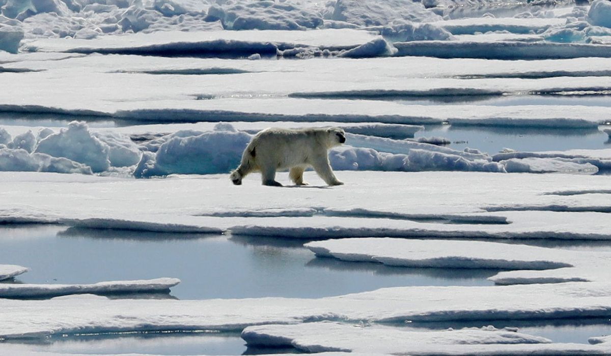 Professor who found polar bears thriving despite climate change fired