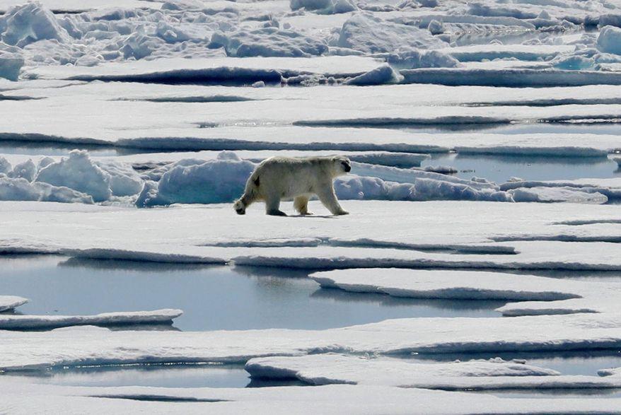 A polar bear walks over sea ice floating in the Victoria Strait in the Canadian Arctic Archipelago. (AP Photo/David Goldman, file)