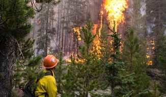 FILE - In this Wednesday, Aug. 7, 2019 file photo, released by U.S. Forest Service, a firefighter watches flames from the Nethker Fire engulf trees at Payette National Forest near McCall, Idaho. A giant forest project in Idaho rejected by the 9th U.S. Circuit Court of Appeals is on again, and an environmental group aims to stop it a second time with another lawsuit. The U.S. Forest Service on Friday, Nov. 1, 2019, approved the 125-square-mile (325-square-kilometer) project on the Payette National Forest, with work expected to start this week. (U.S. Forest Service via AP, File)