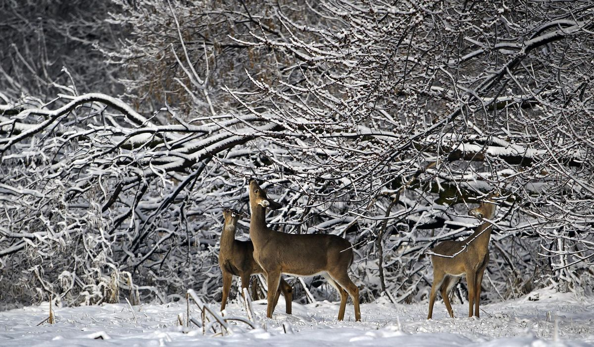 Walz heads to Fergus Falls for annual Governor's Deer Opener - Washington Times