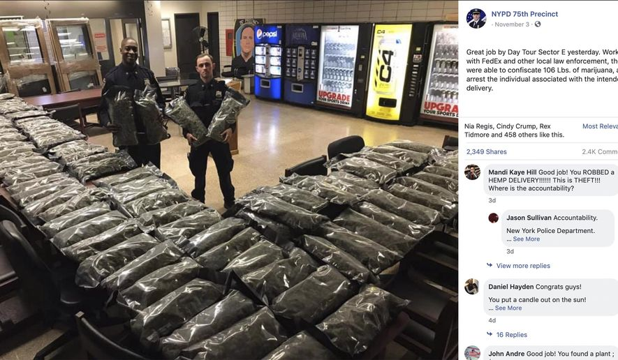 In this undated photo taken from the New York Police Department Facebook page,  officers stand by what NYPD thought was marijuana when they confiscated in the Brooklyn borough of New York on Saturday, Nov. 2, 2019, at the 75th Precinct of the NYPD in New York. The Vermont farm that grew the plants and the Brooklyn CBD shop that ordered them insist they're not pot, but legal industrial hemp. (New York Police Department via AP)