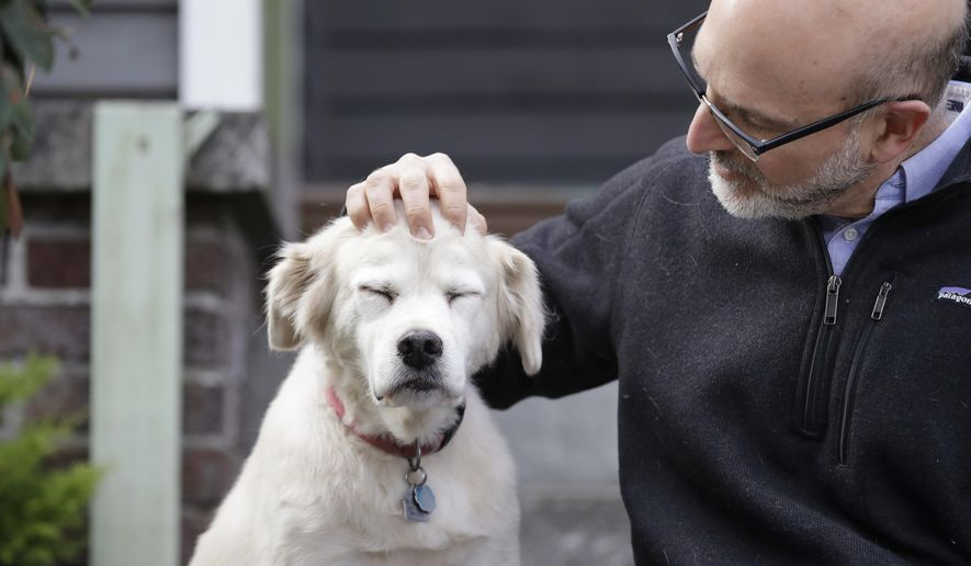 In this Monday, Nov. 11, 2019 photo, University of Washington School of Medicine researcher Daniel Promislow, the principal investigator of the Dog Aging Project grant, rubs the head of his elderly dog Frisbee at their home in Seattle. Can old dogs teach us new tricks? Hoping to shed light on human longevity, scientists need 10,000 pet dogs for the largest-ever study of healthy aging in canines. (AP Photo/Elaine Thompson)