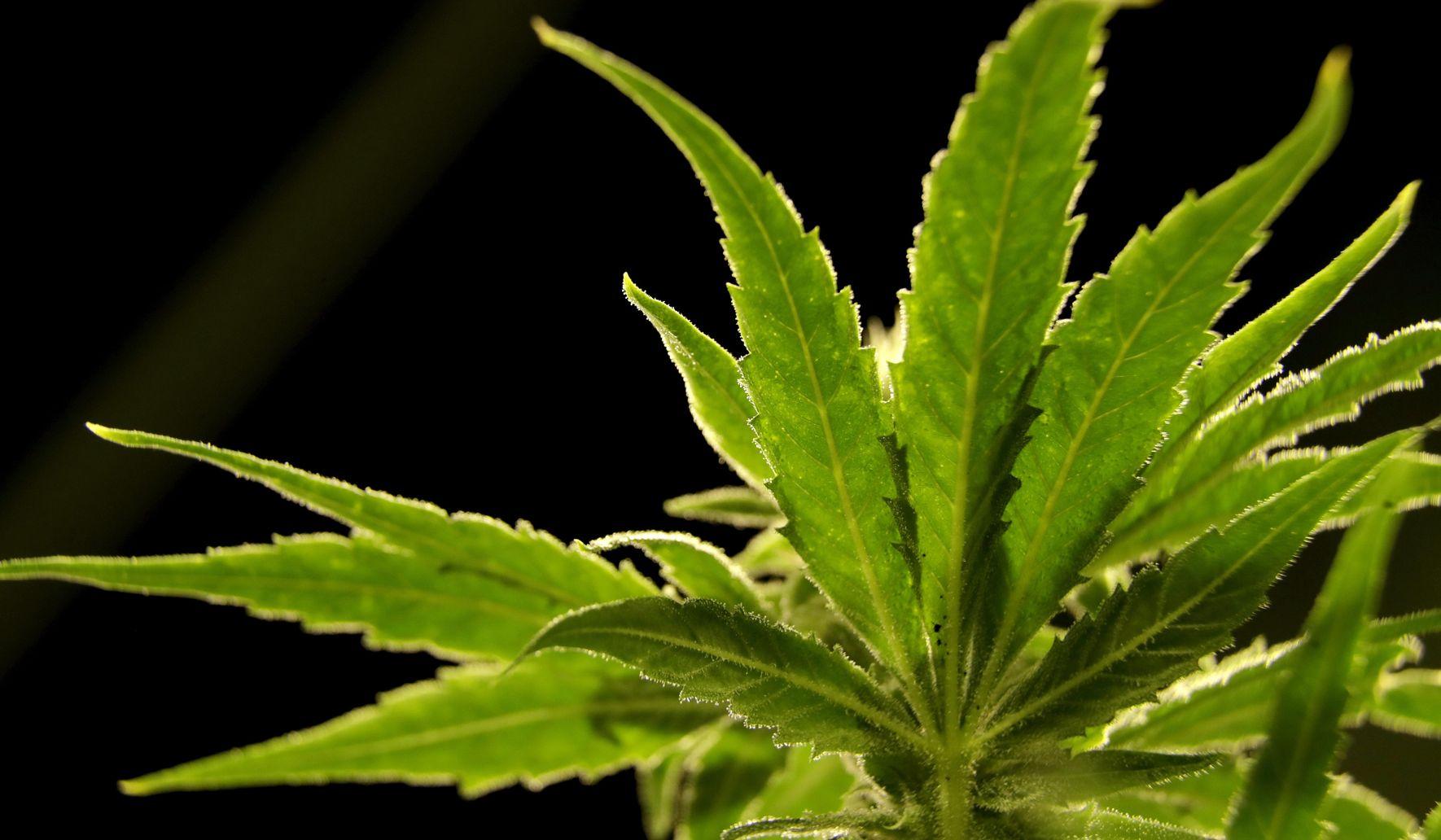 Judiciary Committee passes landmark marijuana legalization bill led by