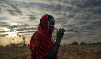 "In this Thursday July 4, 2019 photo, Saitoti Petro, brushes his teeth with a stick before taking his herd to the fields in the village of Narakauwo, Tanzania. Petro says the problem now is that there are too few lions, not too many. ""It will be shameful if we kill them all,"" he says. ""It will be a big loss if our future children never see lions."" And so he's joined an effort to protect lions, by safeguarding domestic animals on which they might prey. (AP Photo/Jerome Delay)"