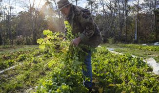 In this Tuesday, Dec. 2, 2019 photo, Sam Bellamy pulls carrots and radishes from the soil of Indigo Farms in Little River, S.C. Indigo Farms straddles the North and South Carolina line in the path of several of the proposed routes for the Highway 31 north expansion. (Jason Lee/The Sun News via AP)