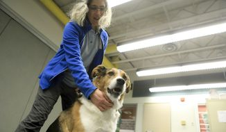 Laura Atwood, public relations coordinator for Anchorage Animal Care and Control, demonstrates how to touch a dog to whom a person has just been introduced by petting Riley, a mixed-breed dog, below its chin on Wednesday, Dec. 18, 2019, at the animal shelter in Anchorage, Alaska. Shelter officials say holiday gatherings with multiple strangers in homes may agitate dogs and make them prone to biting. (AP Photo/Dan Joling)