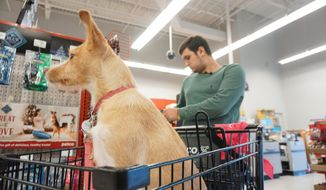 In this Dec. 12, 2019, photo Drew Pescaro and his dog Lily, go on a $500 shopping spree at Petco in Durham, N.C. Pescaro is a survivor of the mass shooting at UNC Charlotte in April. (Trent Brown/The News & Observer via AP)