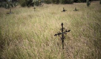 Crosses mark graves amid overgrown grass at Corazon de Jesus cemetery in Maracaibo, Venezuela, Nov. 21, 2019. Thieves often raid graves for valuables, while public cemeteries often go abandoned, overgrown with weeds. (AP Photo/Rodrigo Abd)