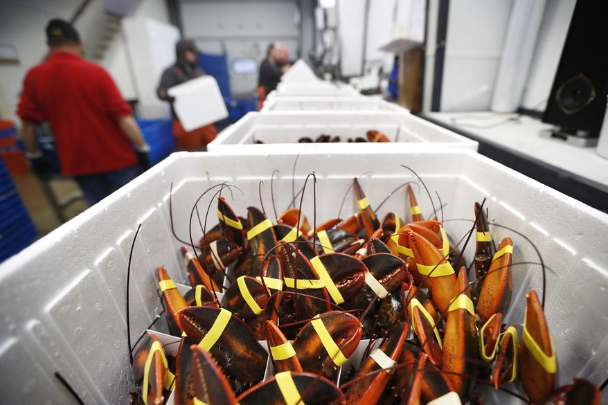 FILE-In this Sept. 11, 2018 file photo, live lobsters are packed in coolers for shipment to China at The Lobster Company in Arundel, Maine. The busiest season for lobster exports to China is around Chinese New Year, which took place Saturday. Lobsters have exploded in popularity with the Chinese middle class but President Donald Trump's trade hostilities with China led to tariffs in 2018 that cratered the U.S. export market. Meanwhile, Canada's market has surged. (AP Photo/Robert F. Bukaty, files)