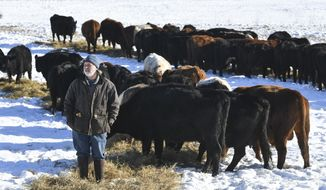 In this Jan. 7, 2020, photo, Thousand Hills owner Matt Maier watches as cows eat hay at his farm near Clearwater, Minn. Maier raises grass-fed beef, and in the Central Minnesota winter he lays out grass that was harvested on warmer days. The cattle stay outside all year and move from pasture to pasture improving the soil, local ecosystem and the environment as a whole. They're working to help sequester carbon and combat climate change. (Dave Schwarz/St. Cloud Times via AP)