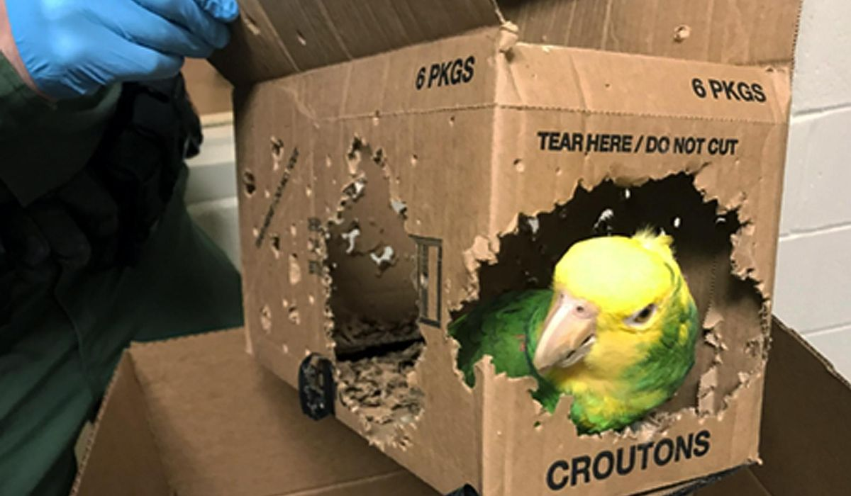 Man charged with smuggling parrots into the United States