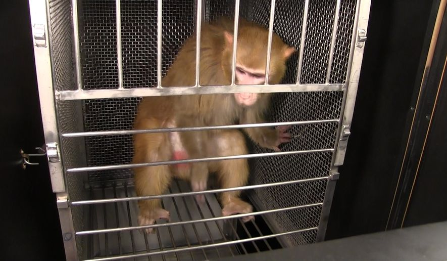People for the Ethical Treatment of Animals has fought for over a year and a half to get research records from the National Institutes of Health regarding unusual lab experiments. (Photo by NIH)