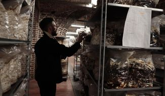 Quentin Declerck, from Le Champignon de Bruxelles, inspects the progress of shelves of mushrooms growing in various substrates at the company's urban farm in the cellars of Cureghem in Brussels, Wednesday, Feb. 5, 2020. When the founding members of the company first tried to grow their Shiitake, Maitake and Nameko mushroom varieties using coffee grounds as a substrate, they realized the fungi much preferred organic beer waste. (AP Photo/Virginia Mayo)