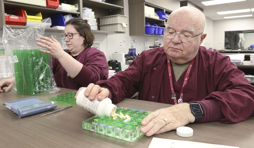 This photo taken Jan. 2, 2020, shows Marshfield Clinic Health System pharmacy technicians Bonnie Kochendorfer, 36, left, and Clark Sheerar, 76, working alongside each other to prepare medication used in the hospital and outpatient clinic on southwest side of Eau Claire, Wis. (Dan Reiland/The Eau Claire Leader-Telegram via AP)