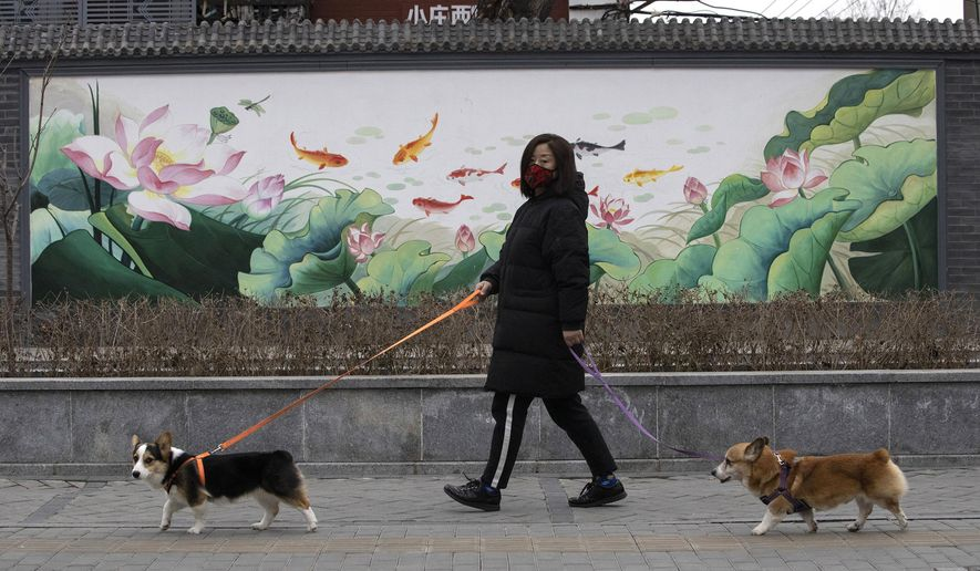 In this Feb. 25, 2020, file photo, a resident wearing mask walks her dogs in Beijing. Pet cats and dogs cannot pass the new coronavirus on to humans, but they can test positive for low levels of the pathogen if they catch it from their owners. That's the conclusion of Hong Kong's Agriculture, Fisheries and Conservation Department after a dog in quarantine tested weak positive for the virus Feb. 27, Feb. 28 and March 2, using the canine's nasal and oral cavity samples. (AP Photo/Ng Han Guan, File)