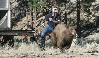 """FILE - In this Aug. 9, 2013, file photo, provided by the Nevada Department of Wildlife, Carl Lackey, a long-time Nevada Department of Wildlife biologist, and a dog named ''Rooster'' chase after a California black bear after it was captured and re-released to the wild in the Carson Range southwest of Carson City, Nev. The Nevada Supreme Court says social media comments posted by bear protection activists at Lake Tahoe referring to the longtime state wildlife biologist as a murderer constitute """"good faith communications"""" protected as free speech. The Reno Gazette Journal reports the recent opinion doesn't end a lawsuit that continues in Washoe County District Court. But it settles a key legal question in the dispute between Lackey and an activist at Lake Tahoe. (John Axtell/Nevada Department of Wildlife via AP, File)"""