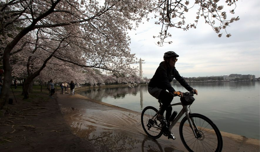 A visitor rides her bike around the Tidal Basin, Thursday, March 19, 2020, in Washington. People are confined to their homes because of the coronavirus but takes advantage of the nice weather and less crowd to see the biggest attraction in Washington during Spring the blooming of the cherry blossoms. (AP Photo/Manuel Balce Ceneta)