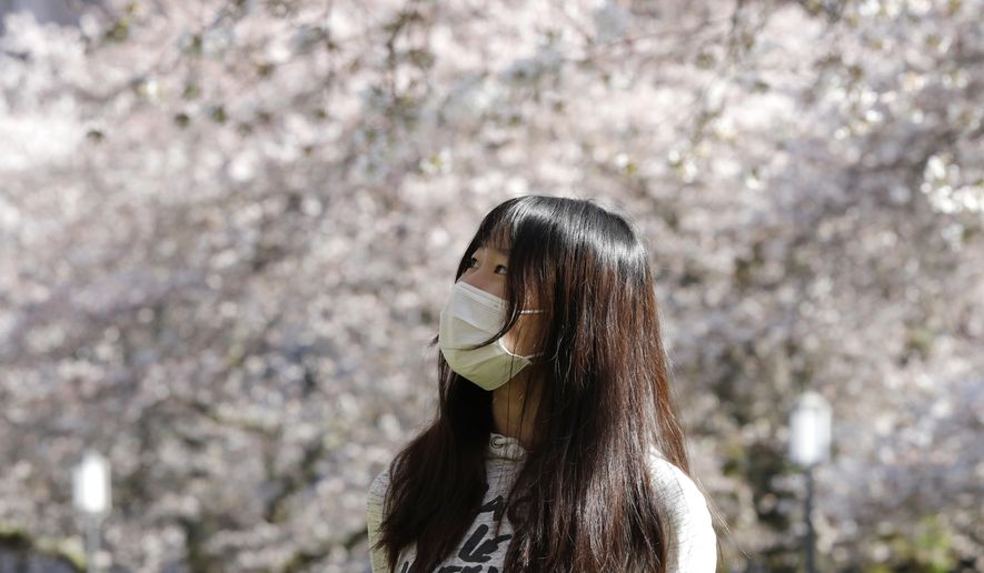 """University of Washington senior Kim Liu looks up at some of the nearly 30 cherry trees nearing their peak bloom on the campus Thursday, March 19, 2020, in Seattle. The school is asking people to avoid coming to campus this year to comply with orders prohibiting gatherings of more than 50 people during the spread of COVID-19. The """"Somei-yoshino"""" variety are particularly striking when they reach full bloom because unlike many other flowering tree species, their white-pink blossoms bloom before the leaves start filling in. (AP Photo/Elaine Thompson)"""