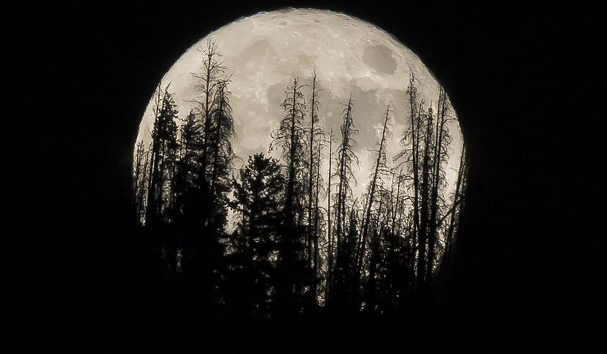 FILE - In this Nov. 14, 2016 file photo, evergreen trees are silhouetted on the mountain top as a supermoon rises over over the Dark Sky Community of Summit Sky Ranch in Silverthorne, Colo., Monday, Nov. 14, 2016. A supermoon will rise in the sky Tuesday evening, April 7, 2020, looking to be the biggest and brightest of the year.  Not only will the moon be closer to Earth than usual, it will also be a full moon.   (AP Photo/Jack Dempsey, File)