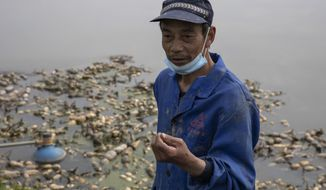 In this April 6, 2020, photo, Jiang Yuewu talks about his crop of aquatic tubers known as lotus roots in the Huangpi district of Wuhan in central China's Hubei province. Stuck in the same bind as many other Chinese farmers whose crops are rotting in their fields, Jiang is preparing to throw out a 500-ton harvest of lotus root because anti-coronavirus controls are preventing traders from getting to his farm near Wuhan, where the global pandemic started. (AP Photo/Ng Han Guan)