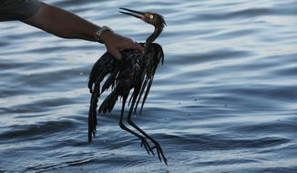 FILE - In this June 26, 2010 file photo, Plaquemines Parish Coastal Zone Director P.J. Hahn rescues a heavily oiled bird from the waters of Barataria Bay, La., which are laden with oil from the Deepwater Horizon oil spill.  Ten years after the nation's biggest offshore oil spill fouled its waters, the Gulf of Mexico sparkles in the sunlight and its fish are safe to eat. But scientists who have spent $500 million dollars from BP researching the impact of the Deepwater Horizon disaster have found much to be concerned about. (AP Photo/Gerald Herbert, File)
