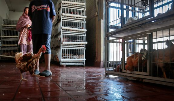A chicken runs past customers after escaping its cage at a live market on Wednesday, Aug. 14, 2013, in Queens borough of New York. The markets serve mostly immigrants accustomed to cooking freshly butchered meats. (AP Photo/Bebeto Matthews)