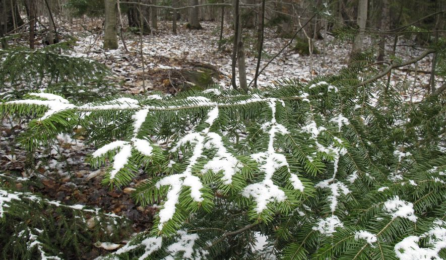 A dusting of snow covers tree branches in Stowe, Vt., on Tuesday May 5, 2020. The National Weather Service predicted snow or rain showers Tuesday morning in parts of New Hampshire, Vermont and Maine. (AP Photo/Wilson Ring)