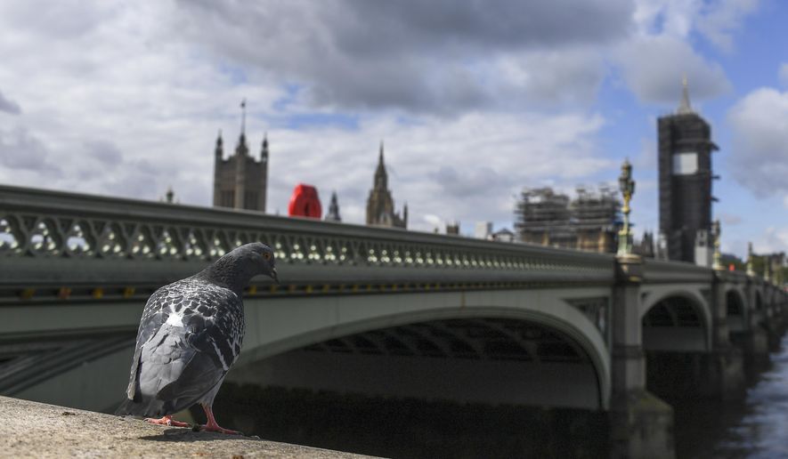 A pigeon stands on the south bank of the river Thames, against the backdrop of the Houses of Parliament, as the country continues its lockdown to curb the spread of coronavirus, in London, Friday, May 1, 2020. (AP Photo/Alberto Pezzali)