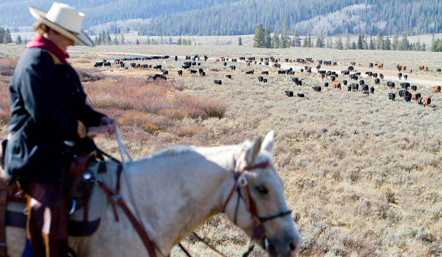 Jeannie Lockwood pauses on a hill during the Green River Drift cattle drive, in Cora, Wyoming. The Green River Drift is one of the country's oldest and longest running cattle drives. (Ryan Jones/Jackson Hole News&Guide via AP)