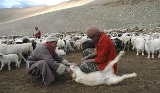 In this July 21, 2007, file photo, an elderly man belonging to the Changpa, the nomadic herders who rear the Pashmina goats, holds his Himalayan goat as his son cuts its horn that was hurting the animal's eye in Kharnak, some 185 kilometers (116 miles) from Leh, India. A months-long military standoff between India and China in 2020 has taken a dire toll on local communities as tens of thousands of Himalayan goat kids die because they couldn't reach traditional winter grazing lands, officials and residents said. (AP Photo/Dar Yasin, File)