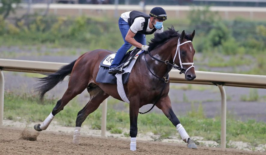 FILE - In this Thursday, June 18, 2020, file photo, Belmont Stakes hopeful Dr Post works out on a track at Belmont Park in Elmont, N.Y. Dr Post, runner up in the Belmont Stakes, is one of the favorities in Saturday's July 18 Haskell Stakes horse race at Monmouth Park Racetrack in Oceanport, N.J. (AP Photo/Seth Wenig, File)