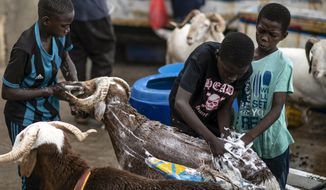 Children wash sheep with soap before they are offered for sale for the upcoming Islamic holiday of Eid al-Adha, on the beach in Dakar, Senegal Thursday, July 30, 2020. Even in the best of times, many Muslims in West Africa scramble to afford a sheep to slaughter on the Eid al-Adha holiday, a display of faith that often costs as much as a month's income, and now the coronavirus is wreaking havoc on people's budgets putting an important religious tradition beyond financial reach. (AP Photo/Sylvain Cherkaoui)