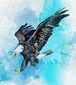 B1-SKIP-Eagle-Fligh.jpg