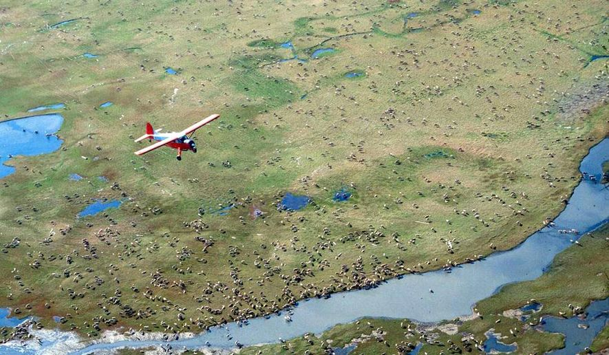 In this undated file photo provided by the U.S. Fish and Wildlife Service, an airplane flies over caribou from the Porcupine Caribou Herd on the coastal plain of the Arctic National Wildlife Refuge in northeast Alaska. (U.S. Fish and Wildlife Service via AP, File)