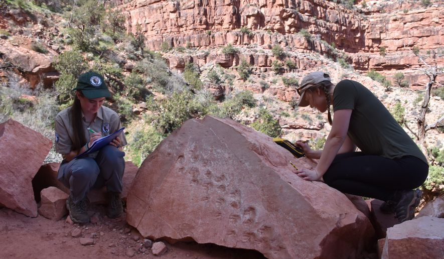 This undated photo provided by Grand Canyon National Park shows park employees Klara Widrig, left, and Anne Miller examining a rock that revealed fossilized footprints at the Grand Canyon in northern Arizona. Some researchers have estimated the footprints are 313 million years old, among the earliest found at the Grand Canyon. (Grand Canyon National Park via AP)