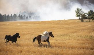 """Freed horses that escaped the brush fire on Christensen Road off of U.S. Highway 2 run unbridled until they can be corralled on Monday, Sept. 7, 2020, in Airway Heights, Wash. Relatives of a homeowner said that their family member's house and barn burned down, which they said resulted in the deaths of five dogs and numerous other small pets, plus one goat, although they were able to free all of the horses in time. A Red Flag Warning was issued earlier in the day, and high winds coupled with the """"Very High"""" designation for fire risk meant the region suffered many large fires. (Libby Kamrowski/The Spokesman-Review via AP)"""