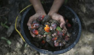 A little girl holds palm oil fruit collected from a plantation in Sumatra, Indonesia, Nov. 13, 2017. An Associated Press investigation has found many palm oil workers in Indonesia and neighboring Malaysia endure exploitation, including child labor. (AP Photo/Binsar Bakkara)