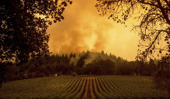 Smoke rises over a vineyard as the Glass Fire burns, Monday, Sept. 28, 2020, in Calistoga, Calif. (AP Photo/Noah Berger)